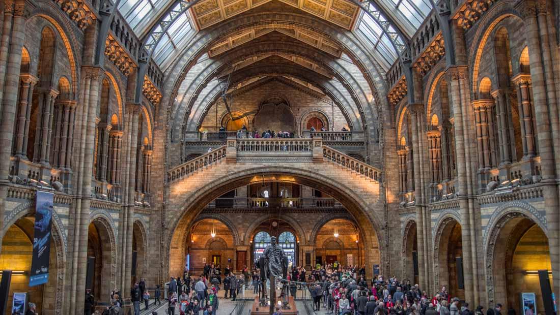 Londra Gezilecek Yerler : Doğa Tarihi Müzesi