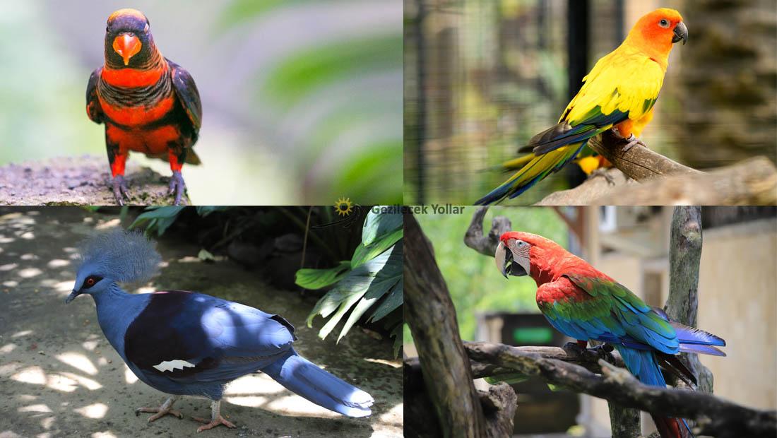 Bali Kuş Parkı