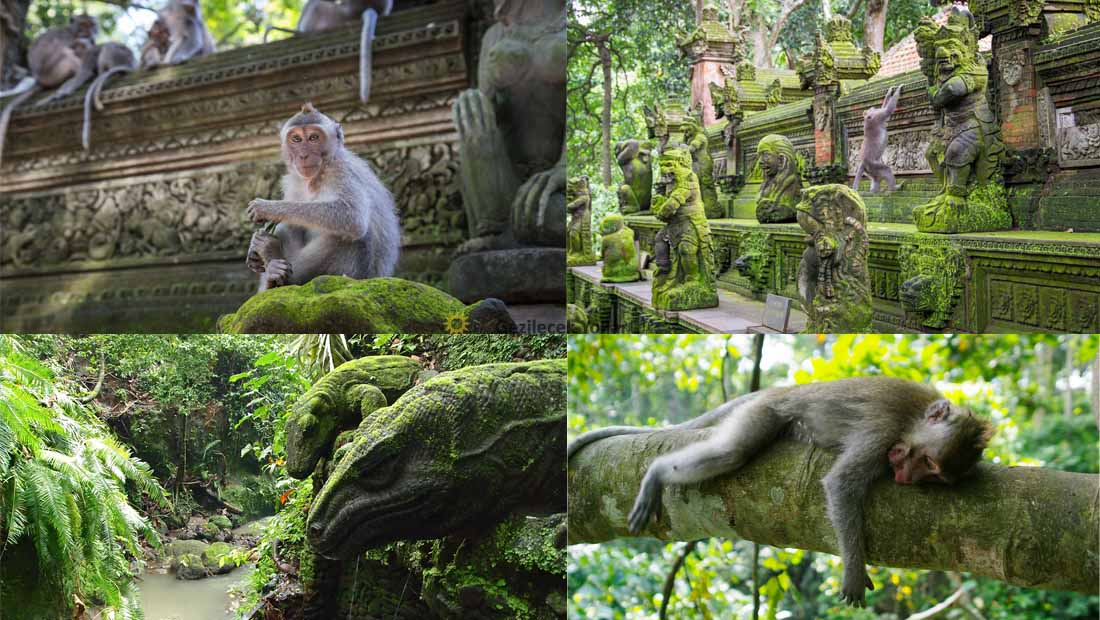 Bali Kutsal Maymun Ormanı