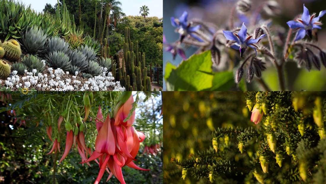 Kraliyet Botanik Bahçeleri